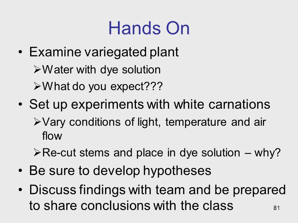 Hands On Examine variegated plant