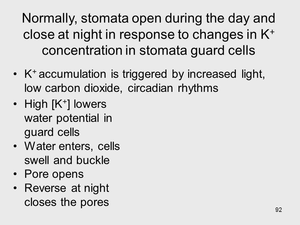 Normally, stomata open during the day and close at night in response to changes in K+ concentration in stomata guard cells