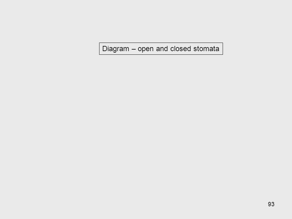 Diagram – open and closed stomata