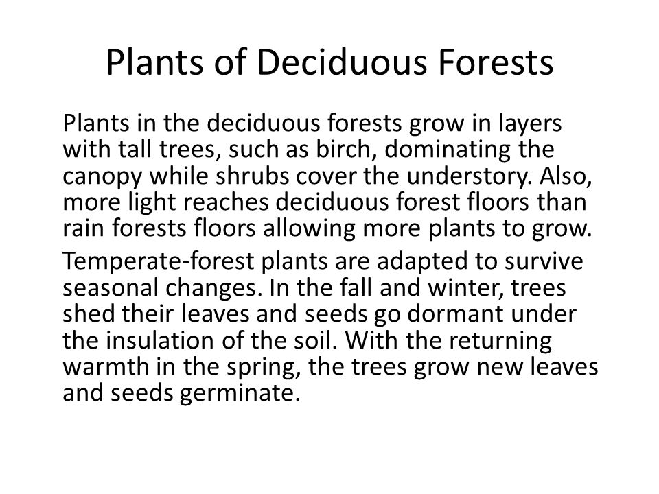 Plants of Deciduous Forests