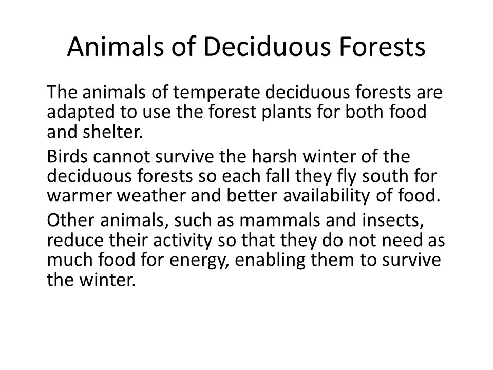 Animals of Deciduous Forests