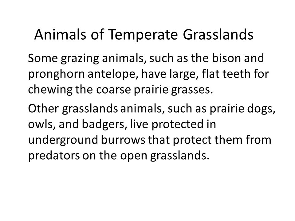 Animals of Temperate Grasslands