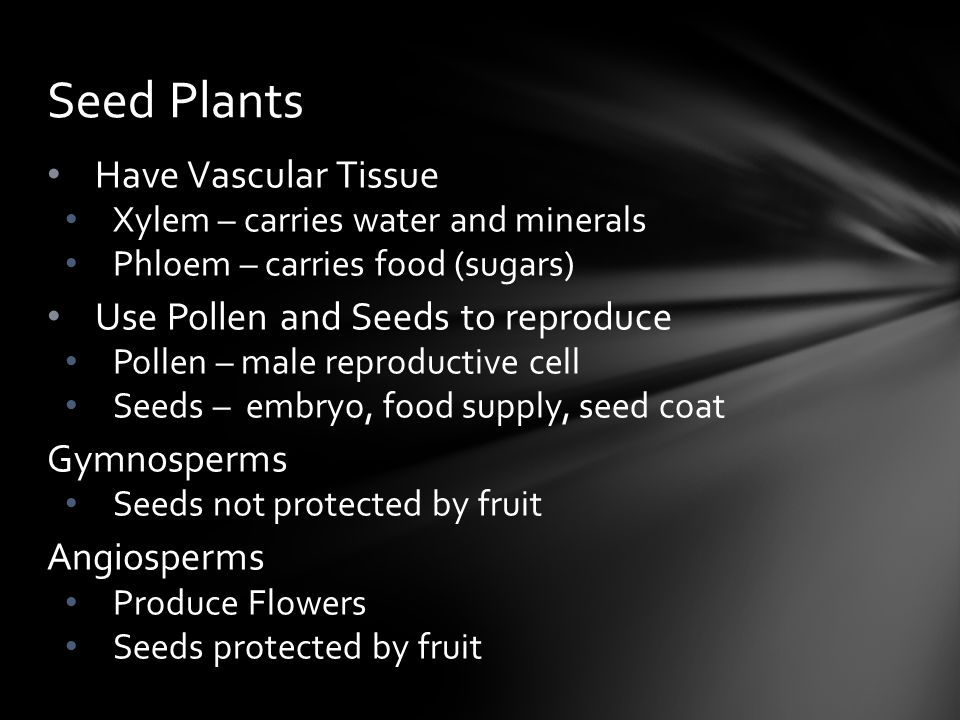 Seed Plants Have Vascular Tissue Use Pollen and Seeds to reproduce