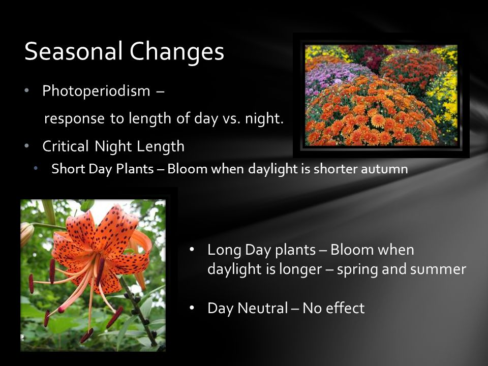 Seasonal Changes Photoperiodism – response to length of day vs. night.
