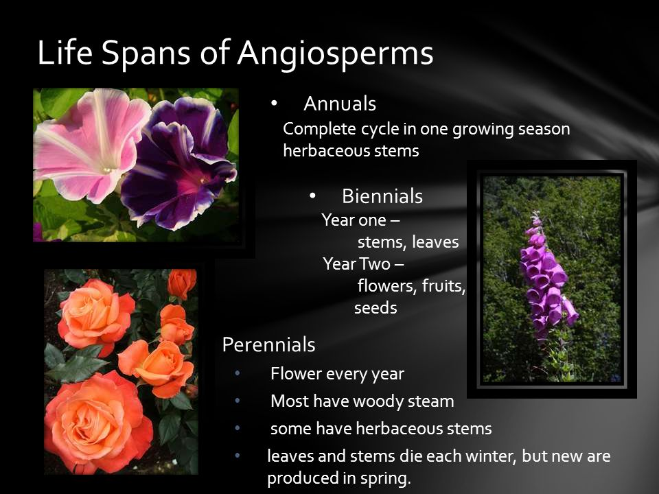 Life Spans of Angiosperms