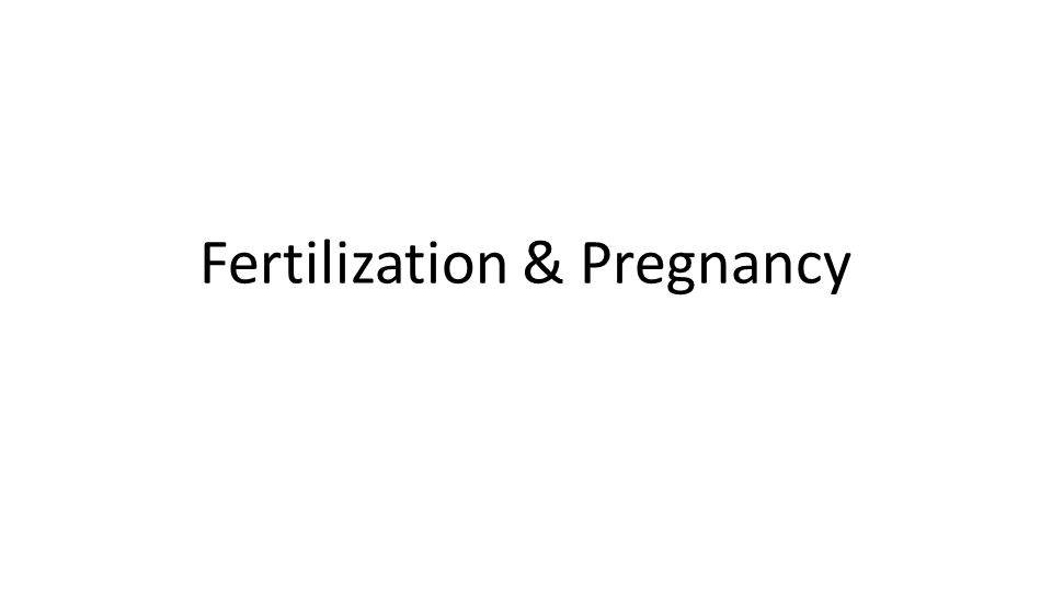 Pregnancy • —time from fertilization until infant is born