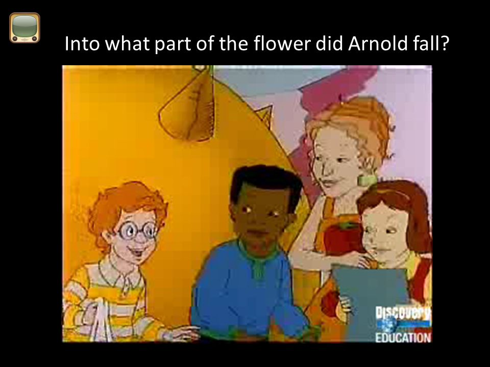 Into what part of the flower did Arnold fall