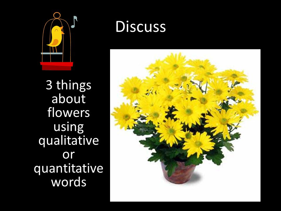3 things about flowers using qualitative or quantitative words