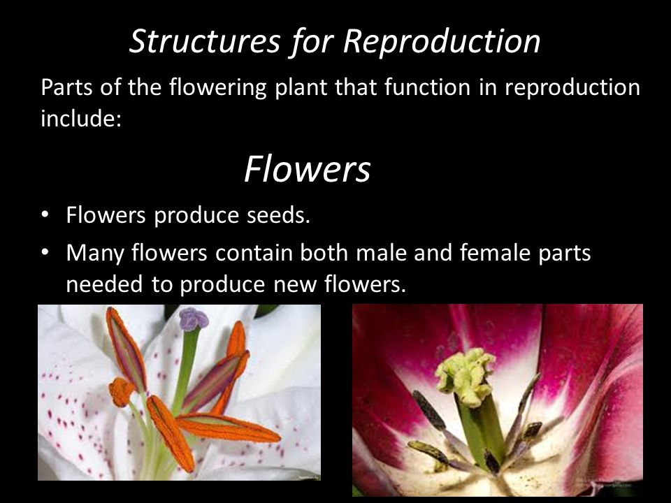 Structures for Reproduction