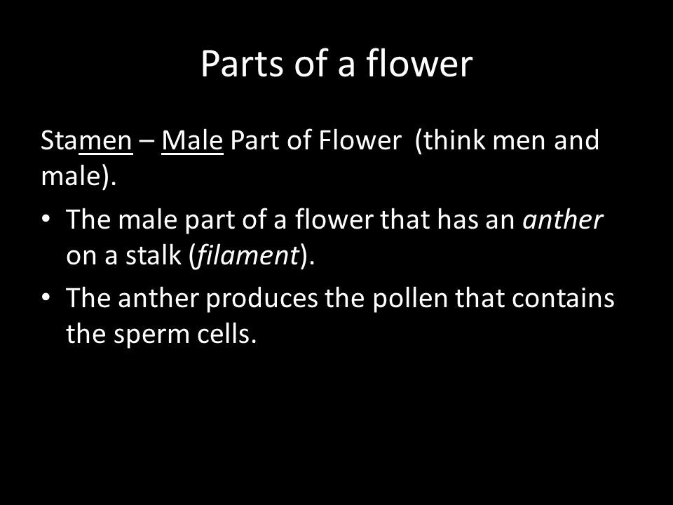 Parts of a flower Stamen – Male Part of Flower (think men and male).