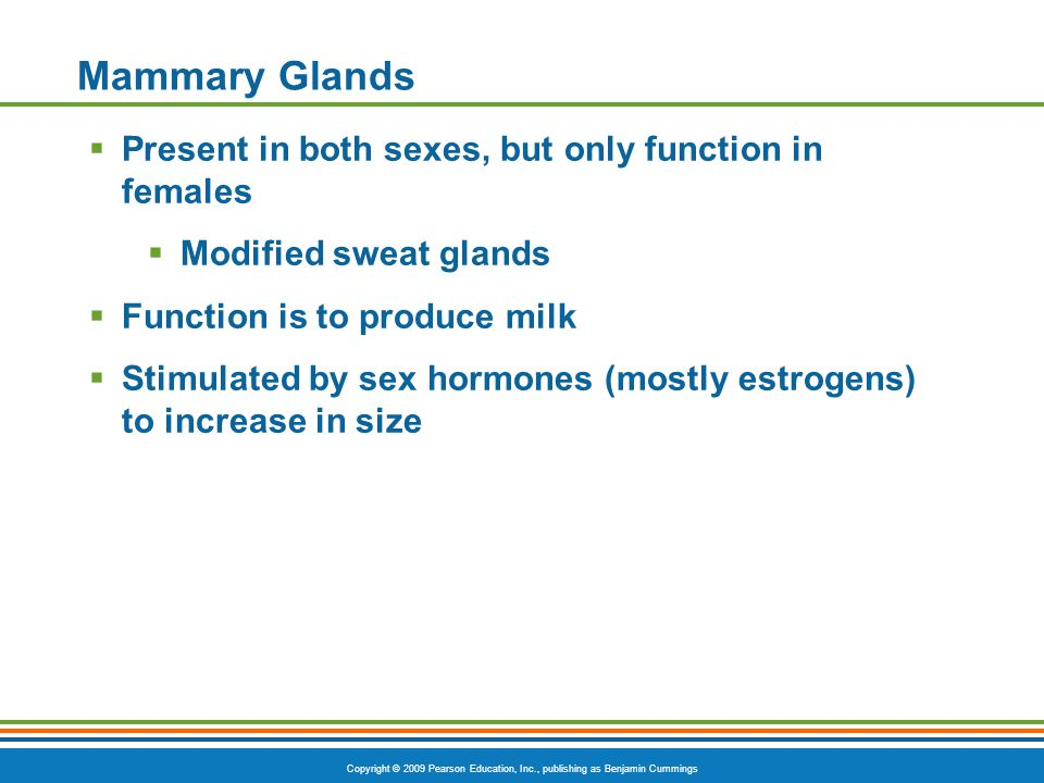 Mammary Glands Present in both sexes, but only function in females
