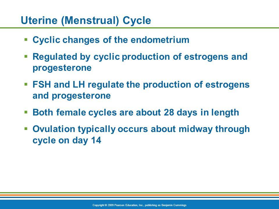 Uterine (Menstrual) Cycle