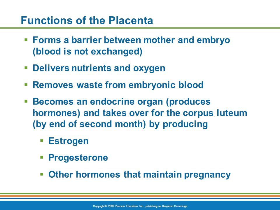 Functions of the Placenta