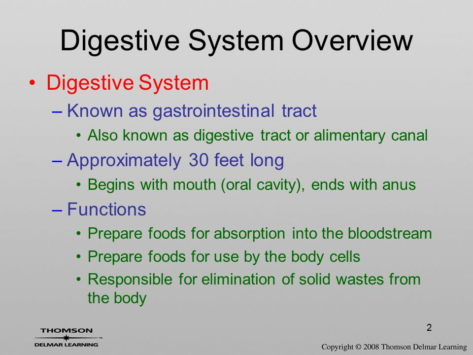 Digestive System Overview