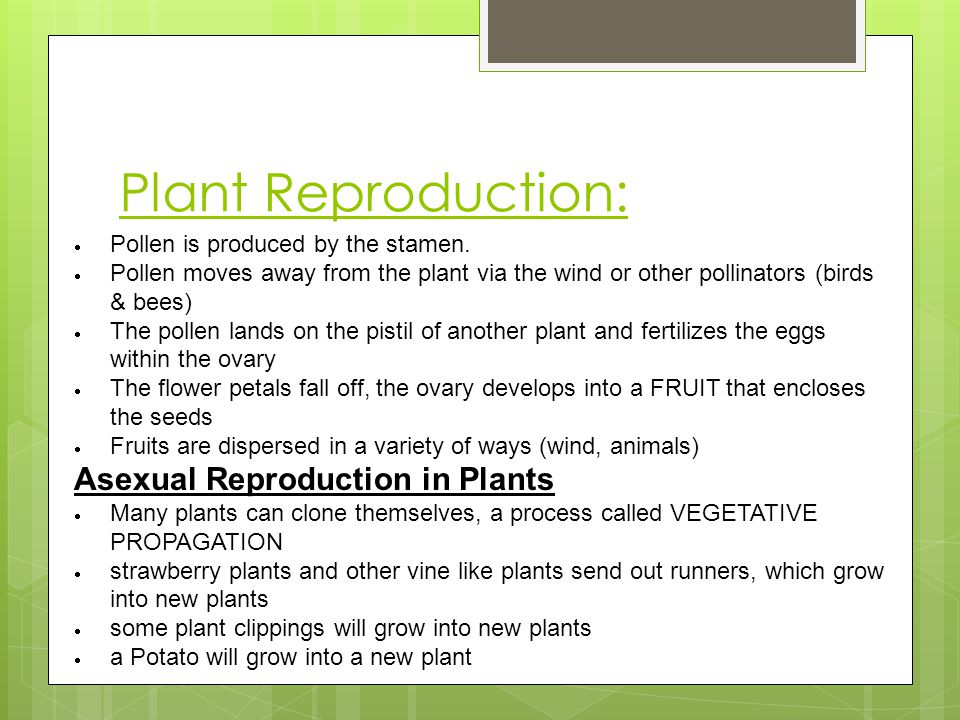 Plant Reproduction: Asexual Reproduction in Plants