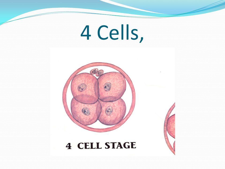 4 Cells,