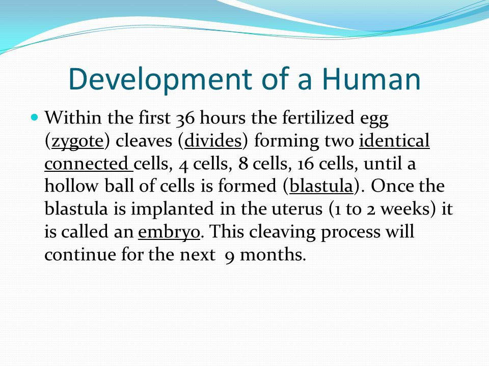 Development of a Human