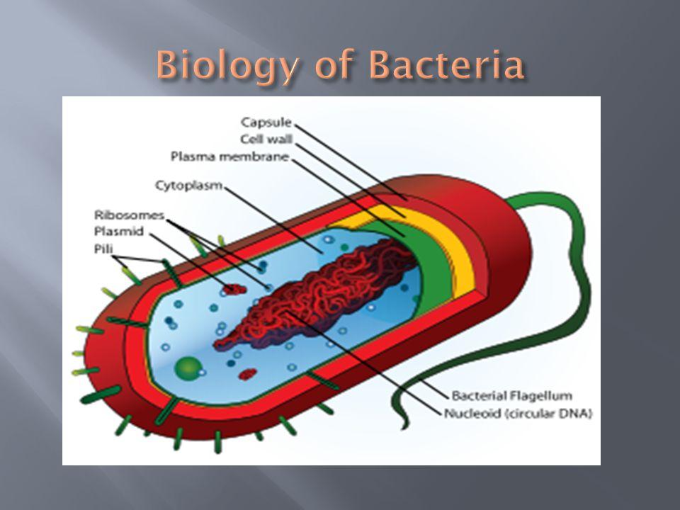 Biology of Bacteria