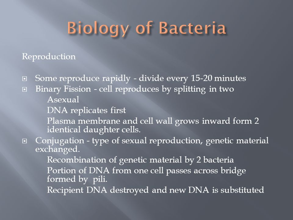 Biology of Bacteria Reproduction