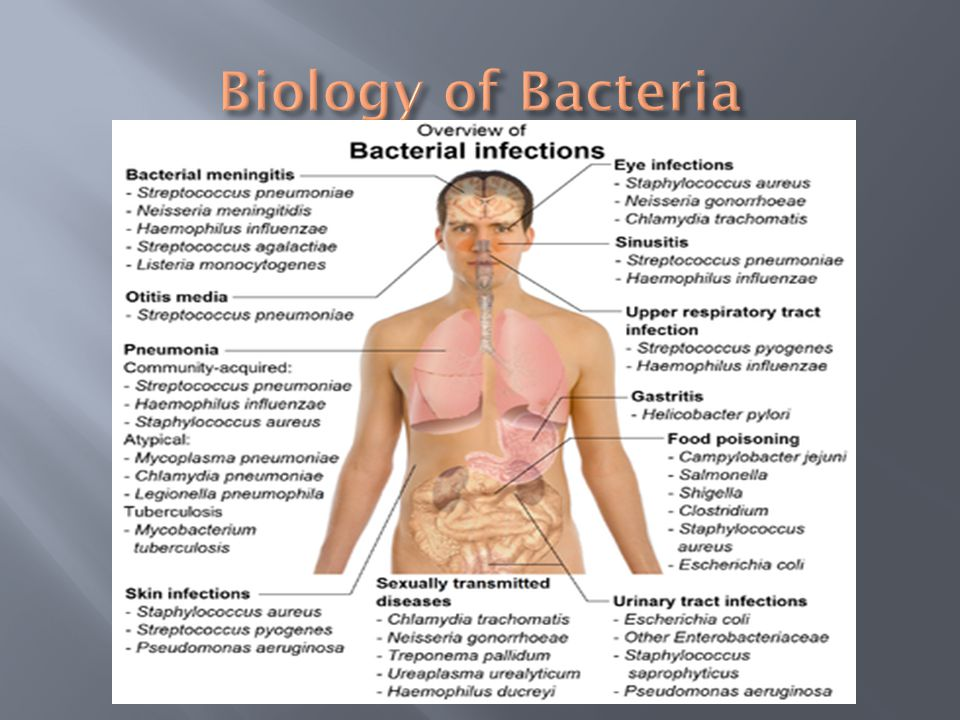 Biology of Bacteria