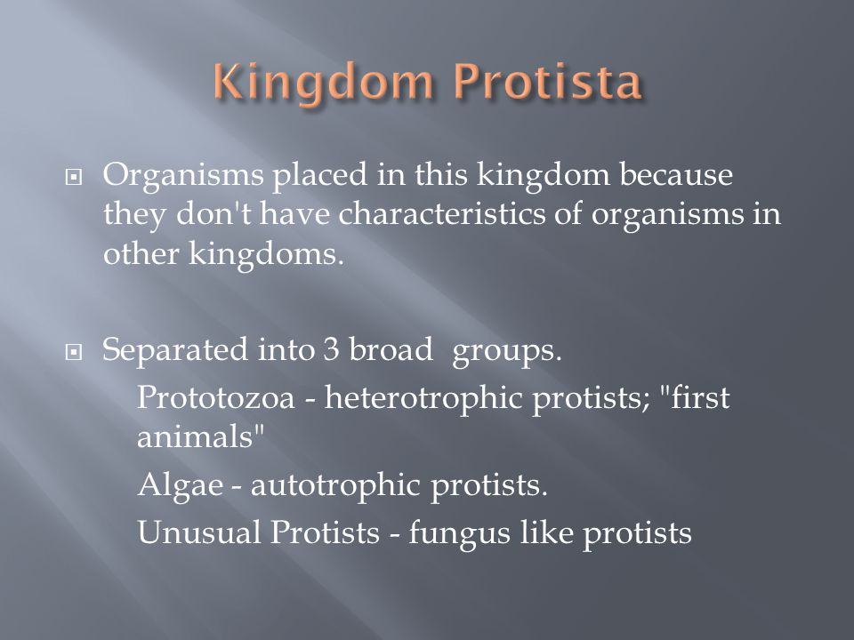 Kingdom Protista Organisms placed in this kingdom because they don t have characteristics of organisms in other kingdoms.