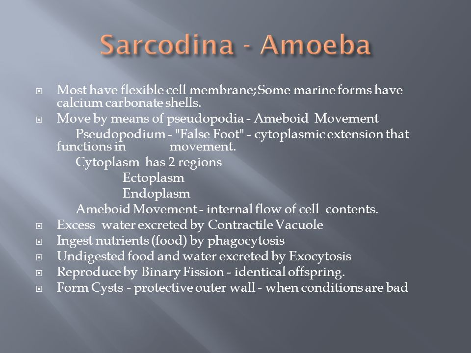 Sarcodina - Amoeba Most have flexible cell membrane; Some marine forms have calcium carbonate shells.