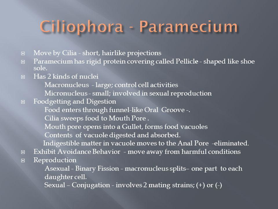 Ciliophora - Paramecium