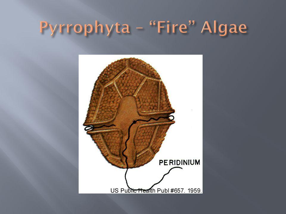 Pyrrophyta – Fire Algae