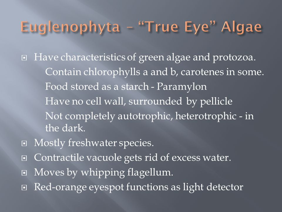 Euglenophyta – True Eye Algae