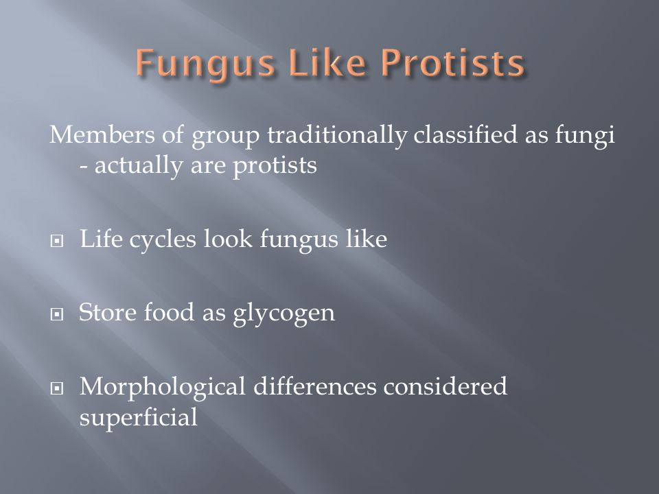 Fungus Like Protists Members of group traditionally classified as fungi - actually are protists.