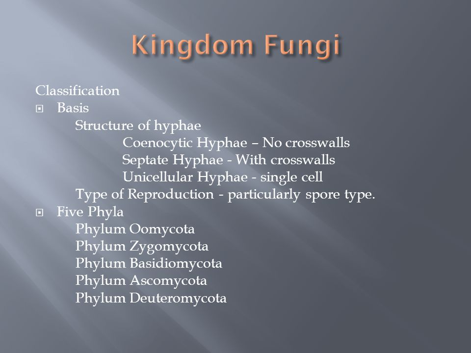 Kingdom Fungi Classification Basis Structure of hyphae