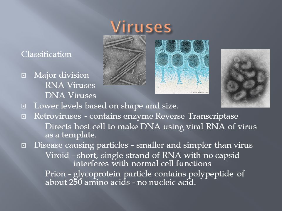 Viruses Classification Major division RNA Viruses DNA Viruses