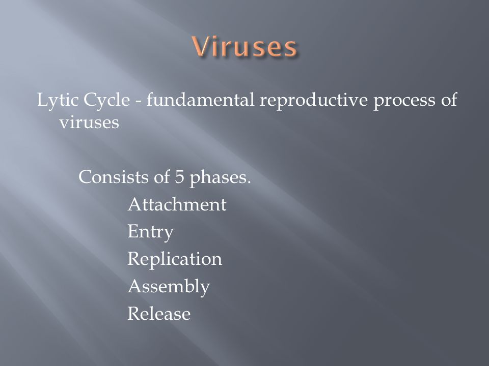 Viruses Lytic Cycle - fundamental reproductive process of viruses Consists of 5 phases.
