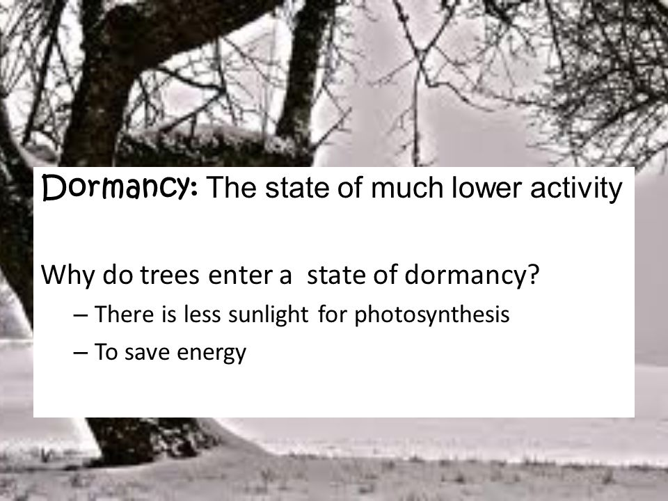 Dormancy: The state of much lower activity
