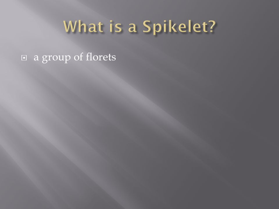 What is a Spikelet a group of florets