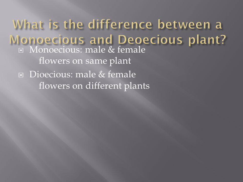 What is the difference between a Monoecious and Deoecious plant