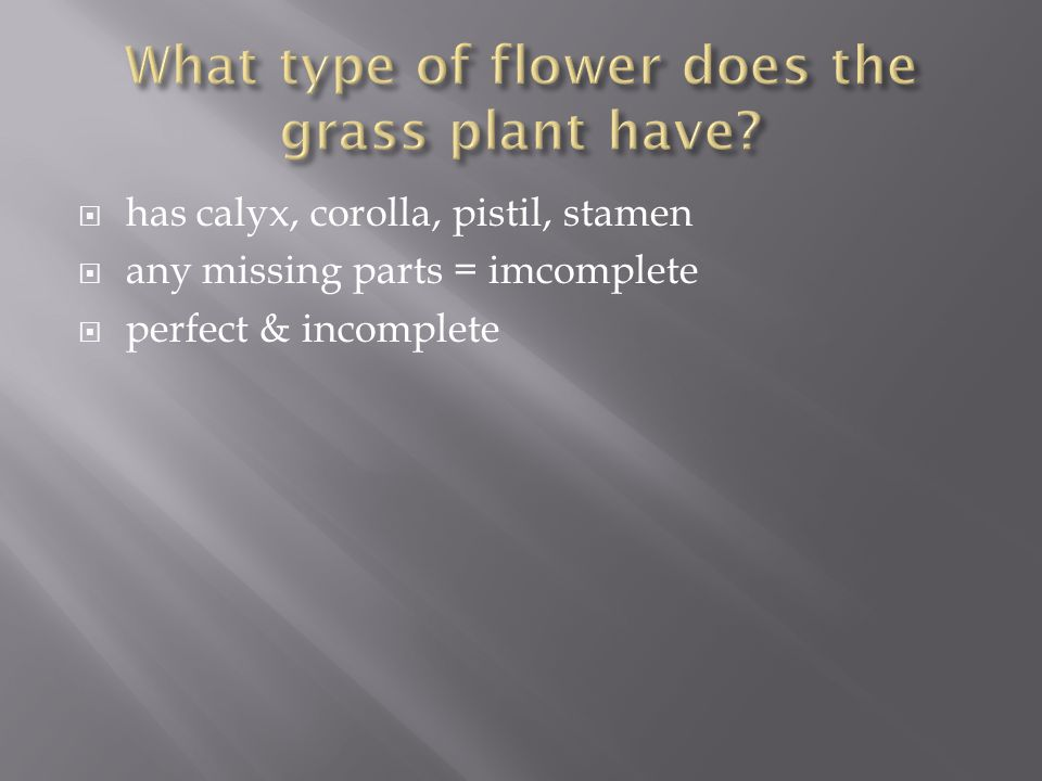 What type of flower does the grass plant have
