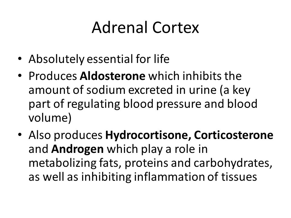 Adrenal Cortex Absolutely essential for life