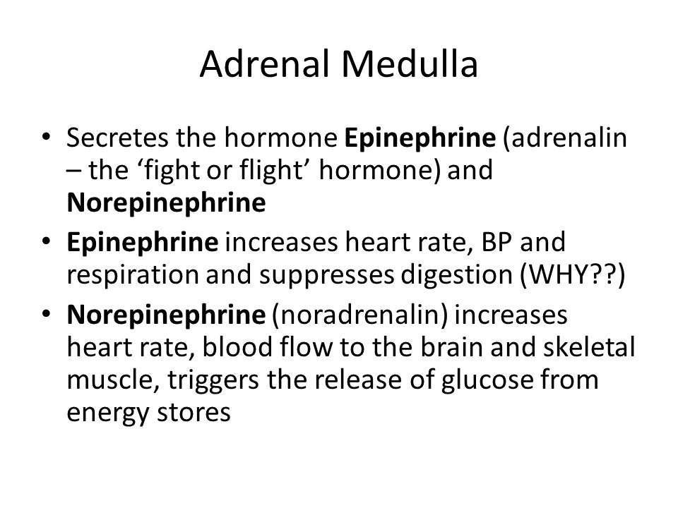 Adrenal Medulla Secretes the hormone Epinephrine (adrenalin – the 'fight or flight' hormone) and Norepinephrine.