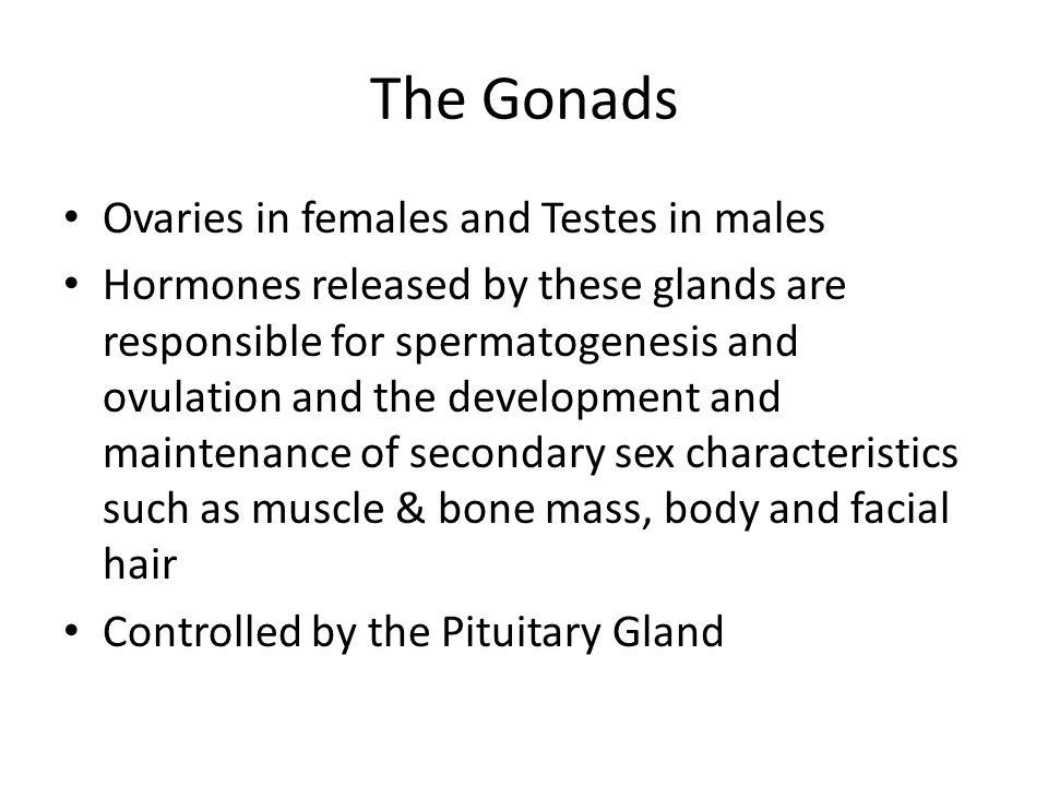 The Gonads Ovaries in females and Testes in males