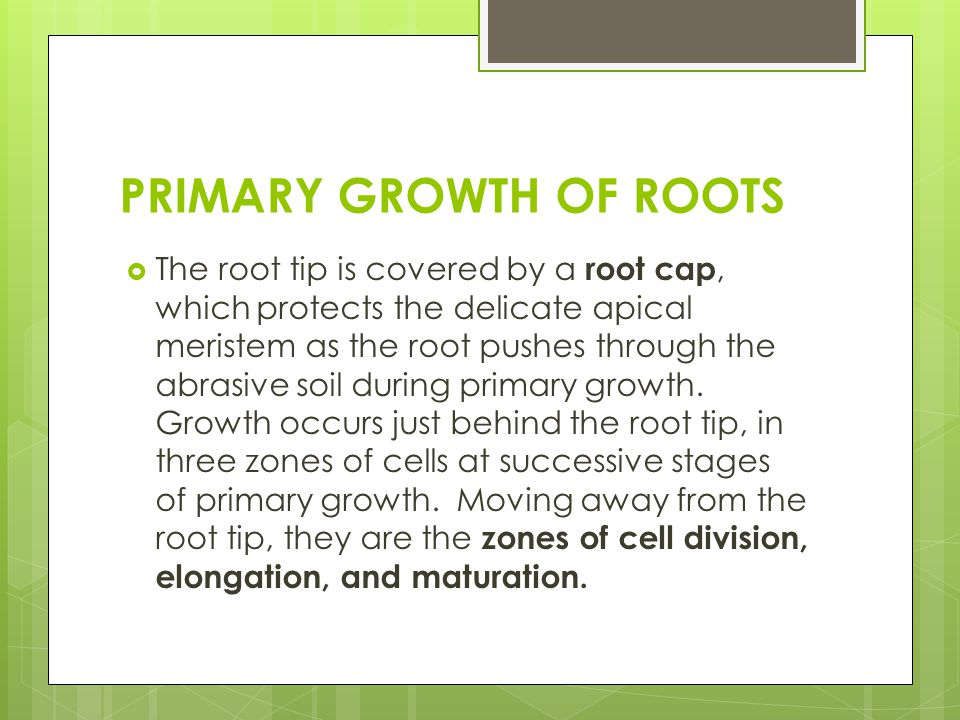 PRIMARY GROWTH OF ROOTS