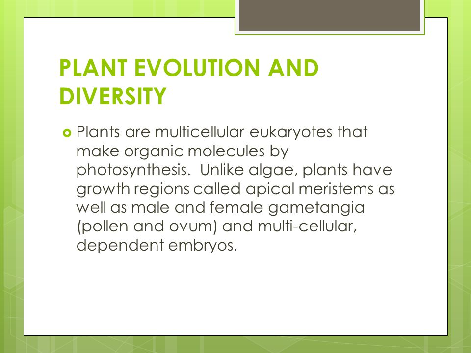PLANT EVOLUTION AND DIVERSITY