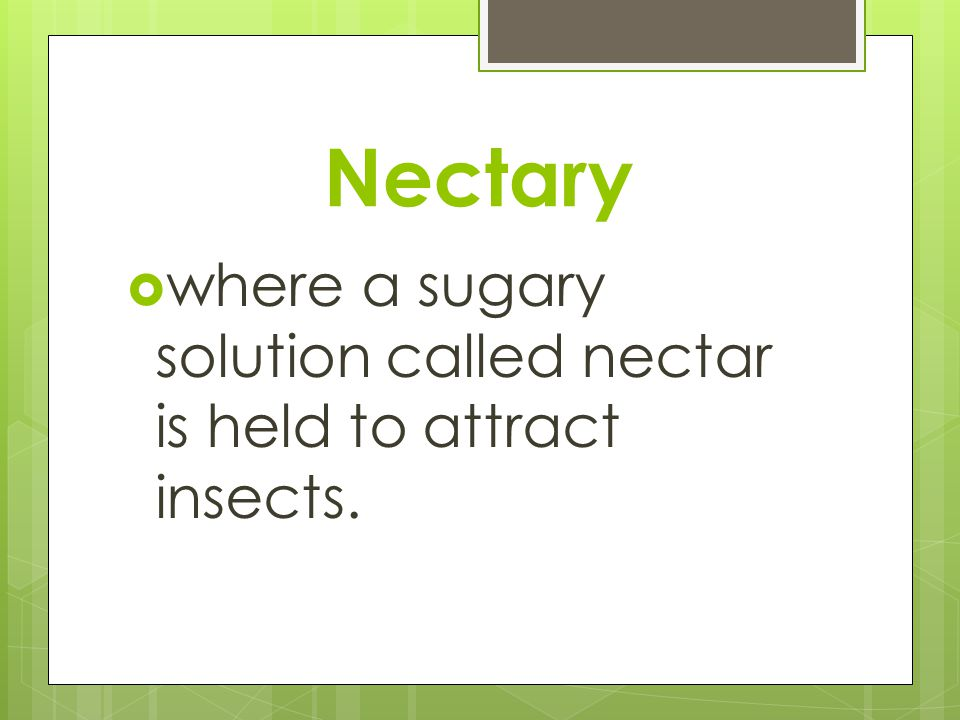 Nectary where a sugary solution called nectar is held to attract insects.
