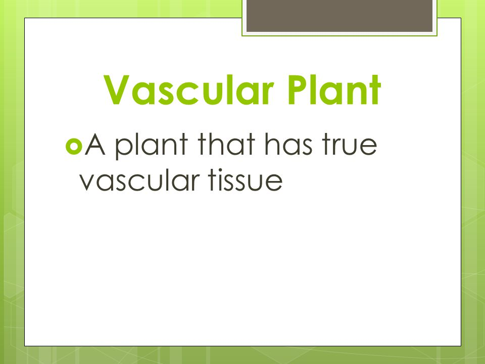 Vascular Plant A plant that has true vascular tissue