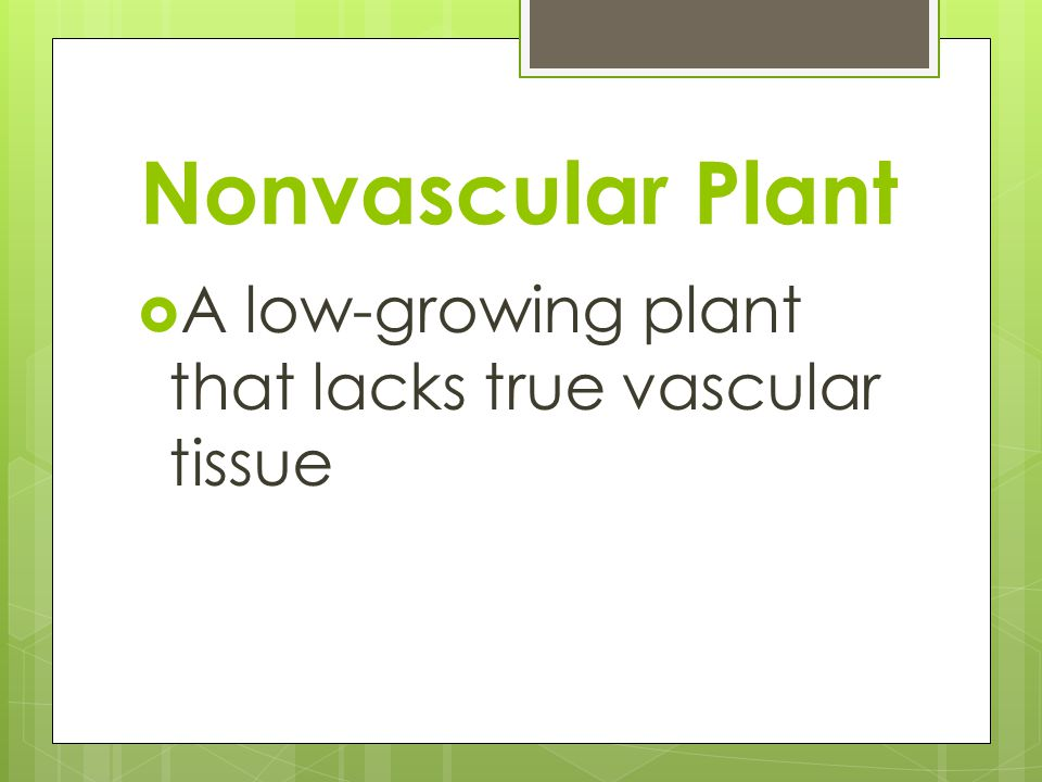 Nonvascular Plant A low-growing plant that lacks true vascular tissue