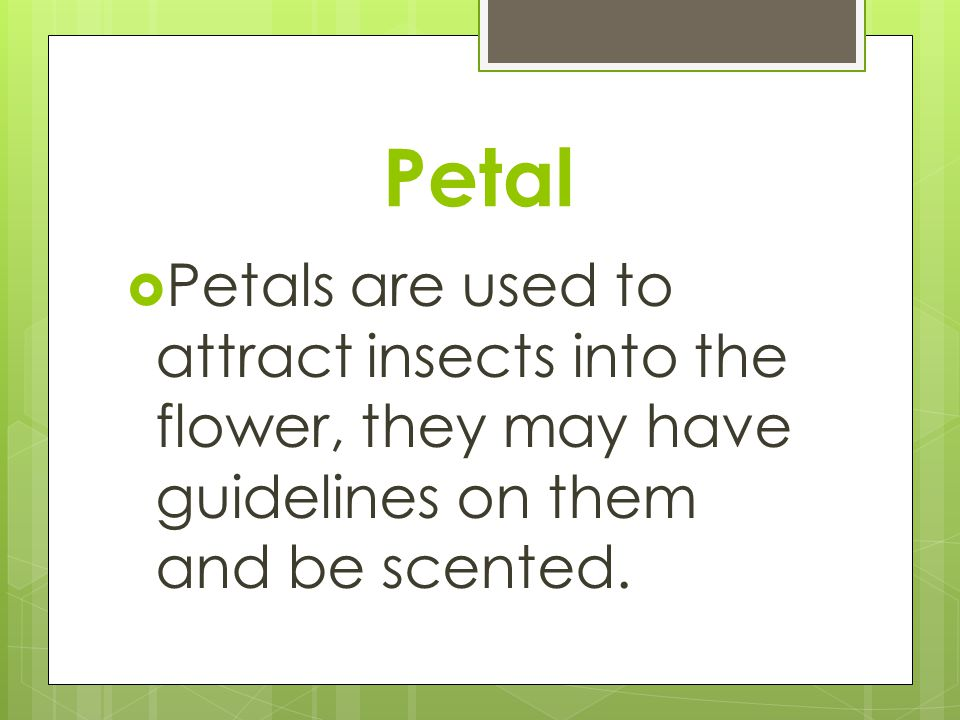 Petal Petals are used to attract insects into the flower, they may have guidelines on them and be scented.