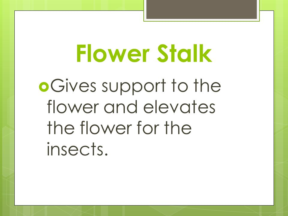 Flower Stalk Gives support to the flower and elevates the flower for the insects.