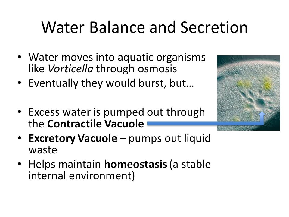 Water Balance and Secretion
