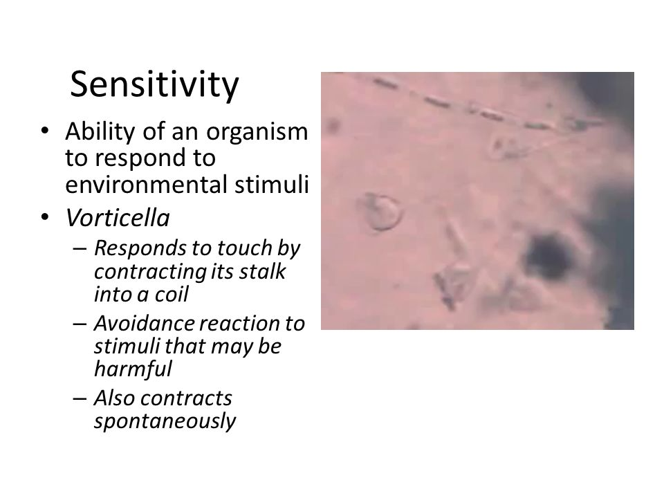 Sensitivity Ability of an organism to respond to environmental stimuli