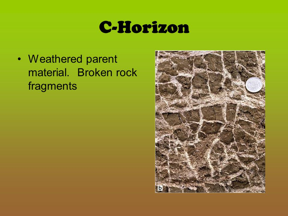 C-Horizon Weathered parent material. Broken rock fragments